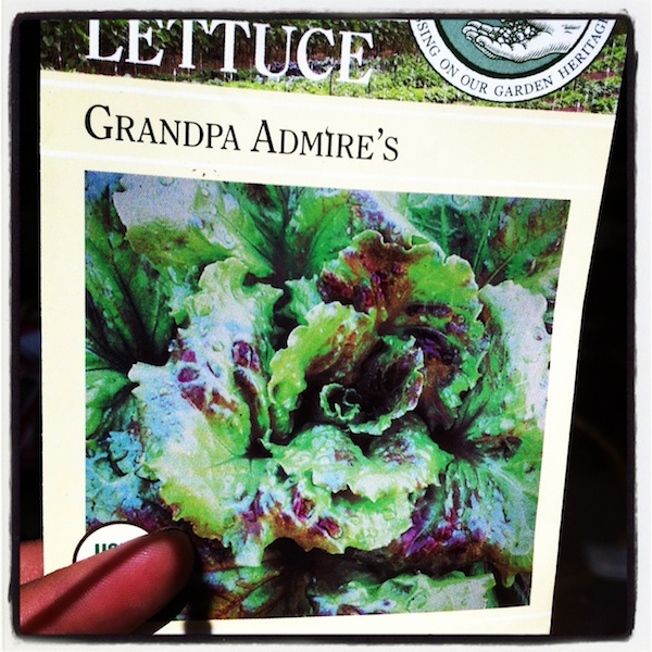 Grandpa Admire's Lettuce